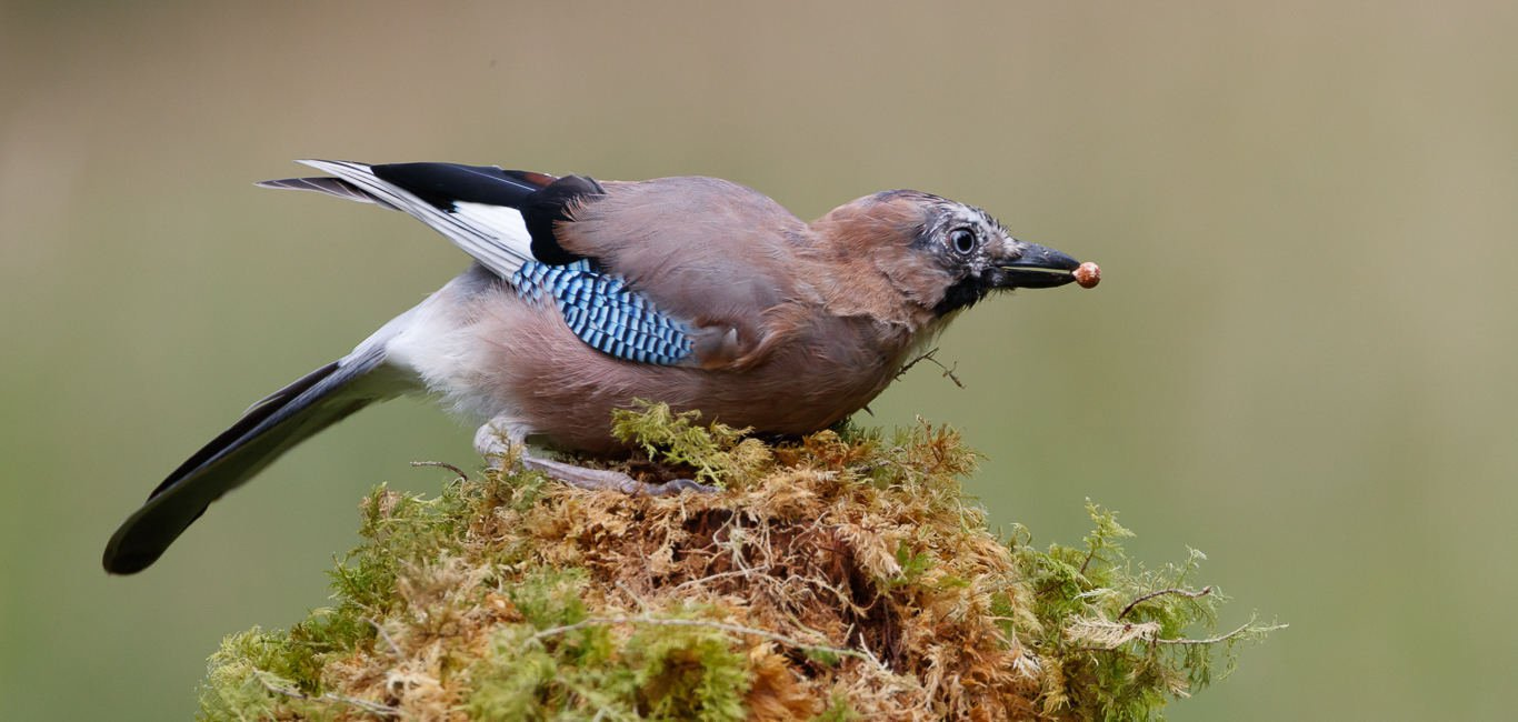 jay bird dumfries and galloway