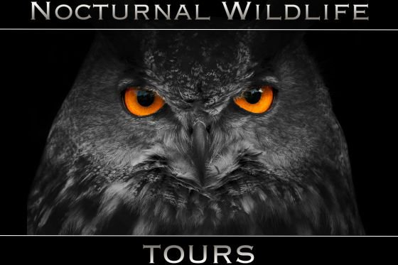 NWT offer Nocturnal wildlife tours in the local area