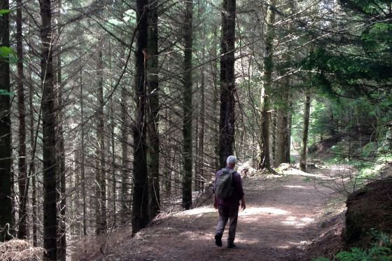 woodland trail near kirkennan, Dumfries and Galloway