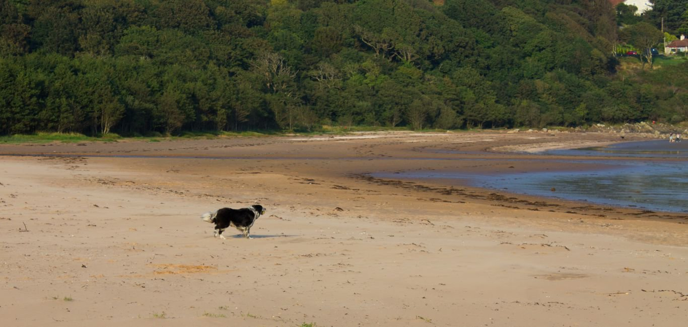Beaches near dog friendly self catering cottages in Scotland