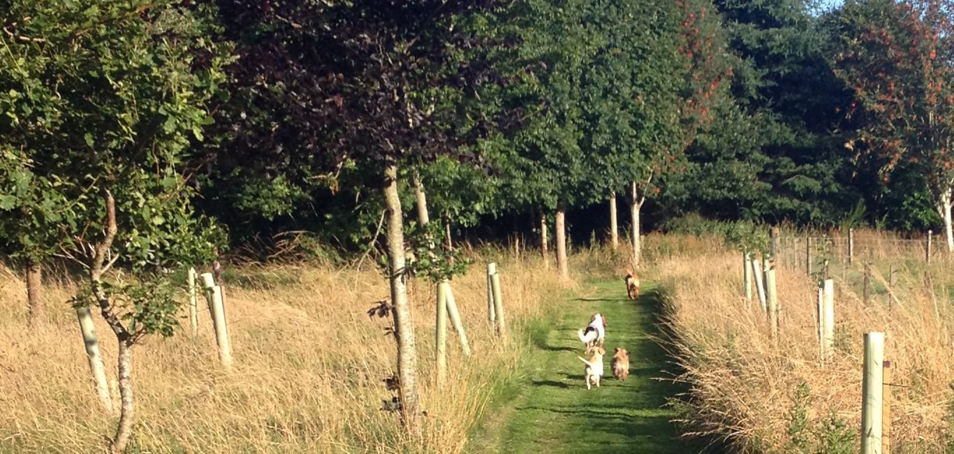 woodland walks dog friendly self catering cottages in Scotland
