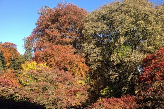 An autumn walk around the landscaped gardens has plenty of variety.