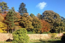 The red brick of the garden wall sets off the tree colours well.