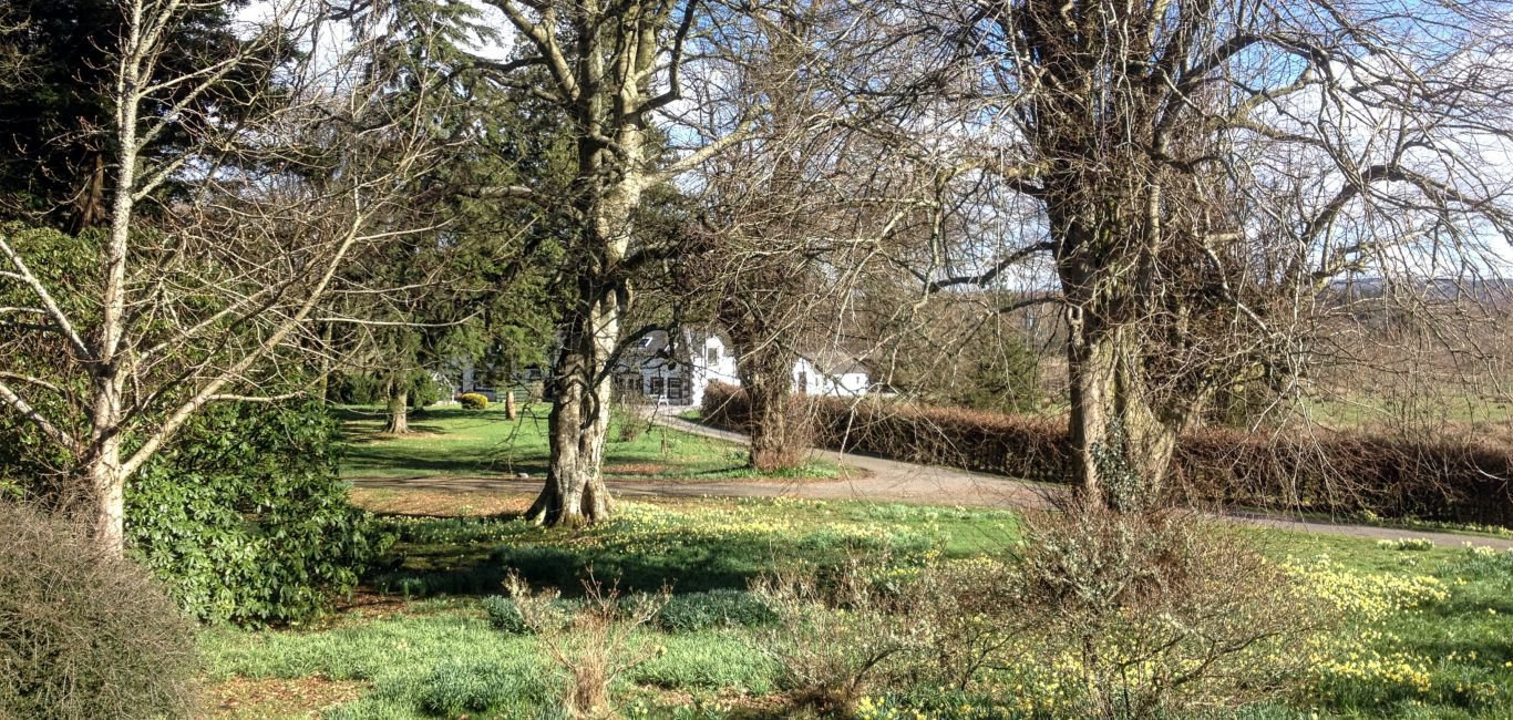 The Mews glimpsed through the trees and daffodils in Spring - see our last minute special offers