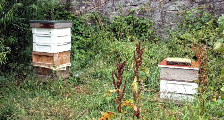 Beehives In The Walled Garden At Kirkennan Estate Holiday Cottages