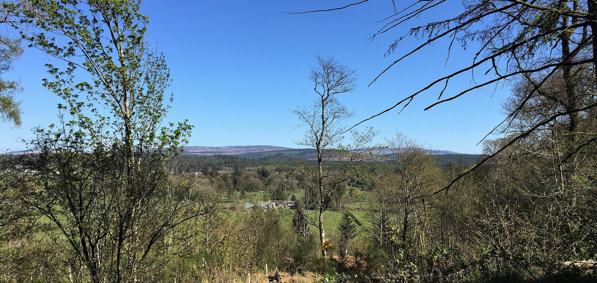 View over Dalbeattie woods from Kirkennan woods