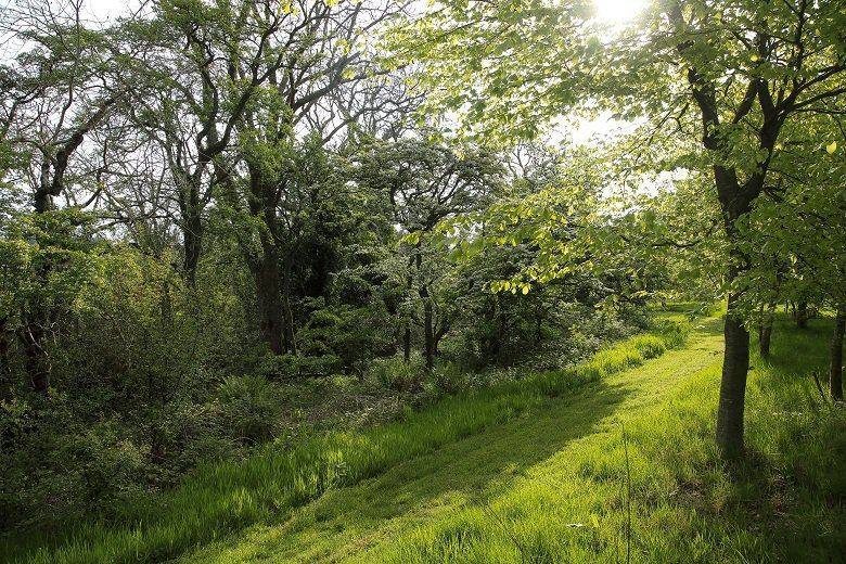 Forest bathing in Jocks wood kirkennan estate holiday cottages dumfries and galloway