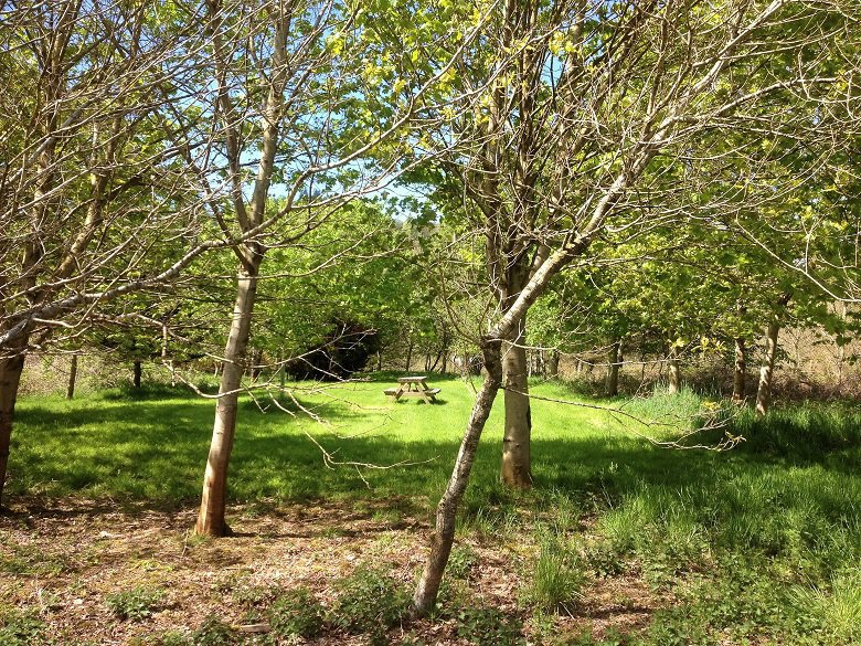 Grove in Jocks wood forest bathing kirkennan estate holiday cottages dumfries and galloway